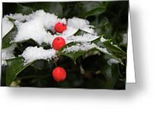 Berries In Snow Greeting Card