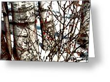 Berries And Birches Greeting Card