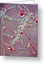 Berries In Ice Greeting Card