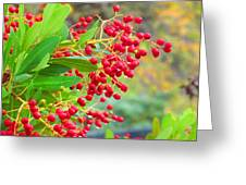 Berries Macro Greeting Card