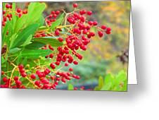 Berries Macro Greeting Card