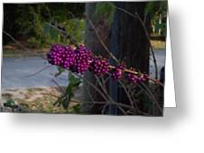 Berries On The Limb Greeting Card