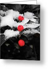 Berries In Snow Greeting Card