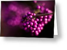 Berries Still Life Greeting Card