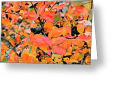 Berry Aronia Greeting Card