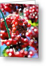 Berry Berry Red-1 Greeting Card