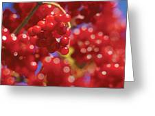 Berry Berry Red-2 Greeting Card