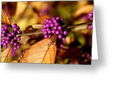 Berry Bush Greeting Card