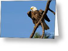 Berry Eagle Greeting Card