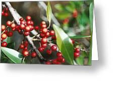 Berry Nice Greeting Card
