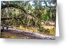 Bethany Cemetery Oaks And Tidal Creek Greeting Card