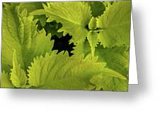 Between The Leaves Greeting Card