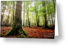 Between The Light And The Shadows Greeting Card