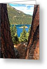 Between The Pines Greeting Card