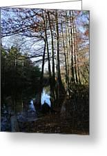 Between Trees Greeting Card