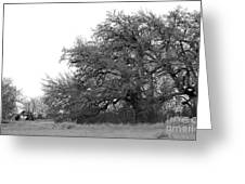 Between Two Trees Greeting Card