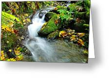 Betwixt The Mossy Rocks Greeting Card