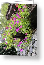 Beutiful Flowers Hang The Wall . Greeting Card