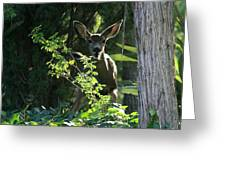 Beverly Hills Deer Greeting Card