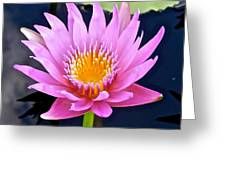 Beyond Beautiful Water Lily 2 Greeting Card
