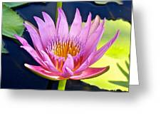 Beyond Beautiful Water Lily Greeting Card