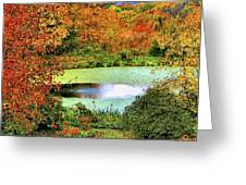 Beyond The Birch Pathway Greeting Card