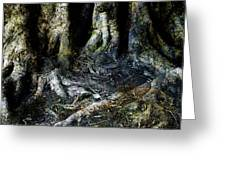 Beyond The Forest Edge Greeting Card