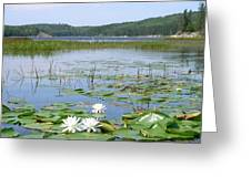 Beyond The Lilly Pads Greeting Card