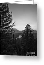 Beyond The Trees Bw Greeting Card