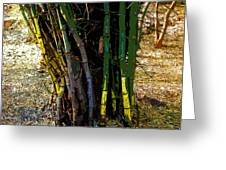 Bhopal Bamboos Greeting Card