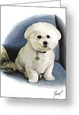 Bichon Sonny Greeting Card