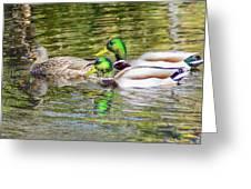 Bidwell Ducks In Fall Greeting Card