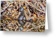 Bidwell Turtles In Fall Greeting Card