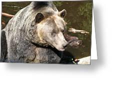 Big Bear Greeting Card