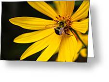 Big Bee, Little Flower Greeting Card
