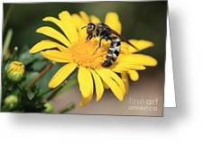 Big Bee On Yellow Daisy Greeting Card