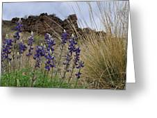 Big Bend Bluebonnets Greeting Card