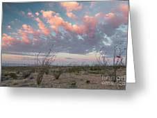 Big Bend Sunrise-blooming Ocotillo Greeting Card