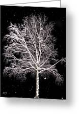 Big Birch Greeting Card