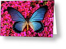 Big Blue Butterfly On Kalanchoe Flowers Greeting Card