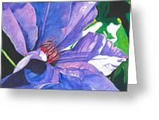 Big Blue Clematis Greeting Card