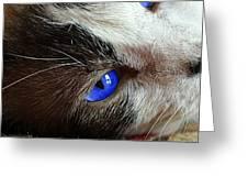 Big Blue Eyes Cat Greeting Card