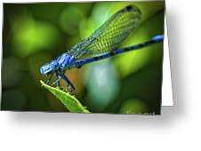 Big Blue Eyes Damselfly  Greeting Card