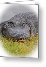 Big Boy Gator 2 Greeting Card