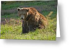 Big Brown Bear Greeting Card