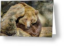 Big Brown Bear Greeting Card