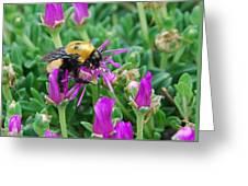 Big Bumblebee Greeting Card