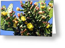 Big Cactus, Yellow Flowers Greeting Card