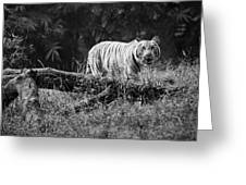Big Cat In The Woods Greeting Card