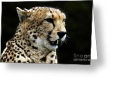 Big Cats 101 Greeting Card